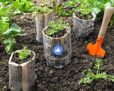masetero de perodico crecer semillas Cómo hacer maceteros de periódico para hacer crecer semillas