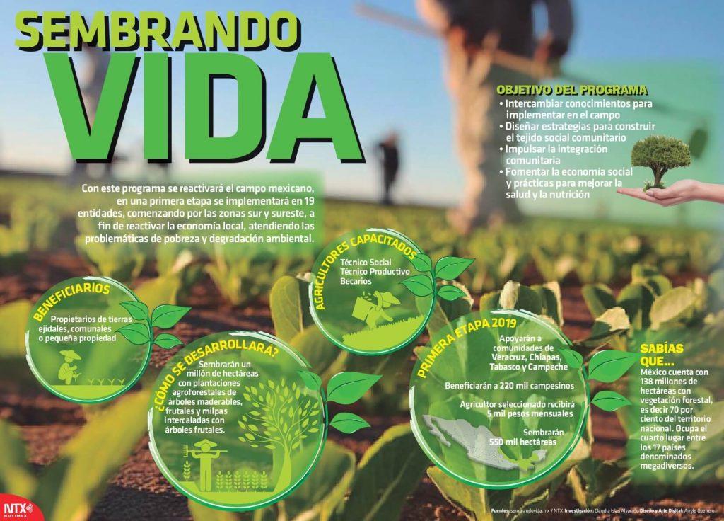objetivos programa sembrando vida Programa Sembrando vida: plantar árboles por 5 mil pesos